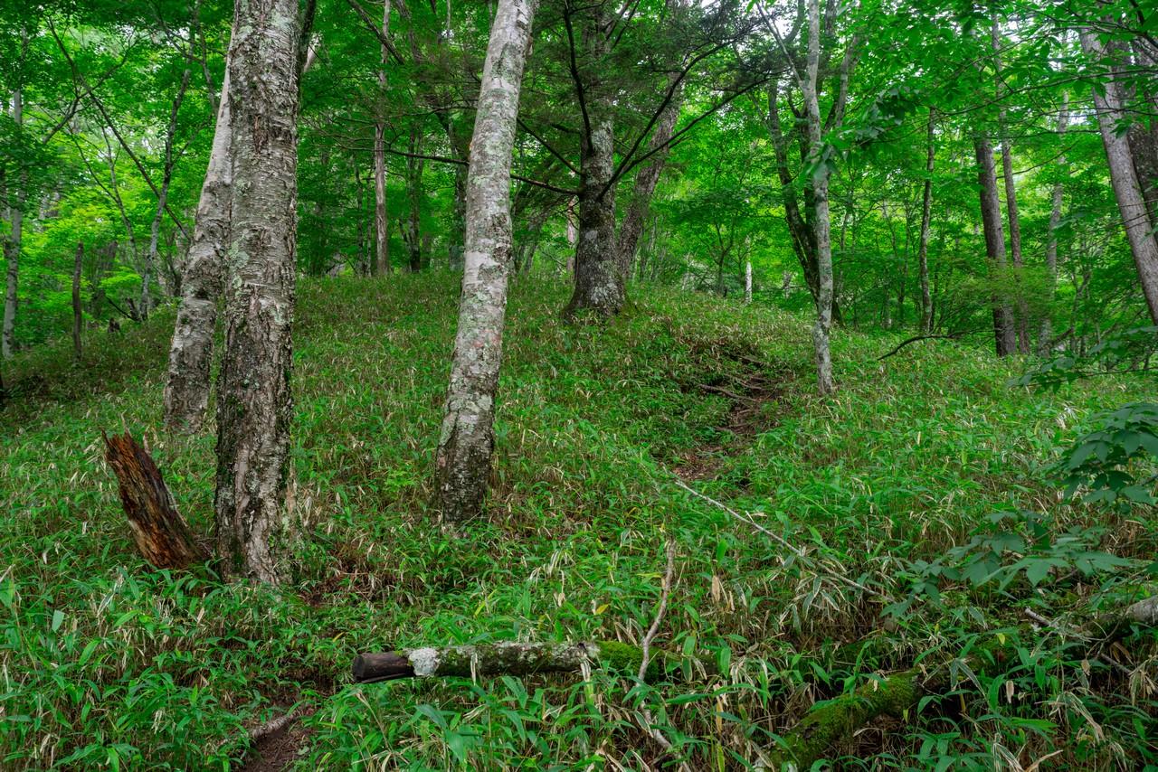 200719雨乞岳-031