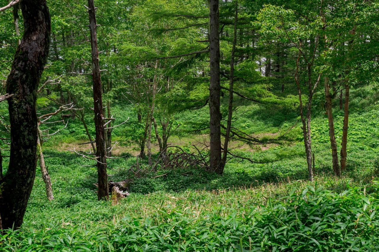 200719雨乞岳-036
