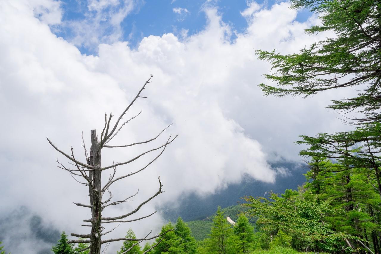 200719雨乞岳-040