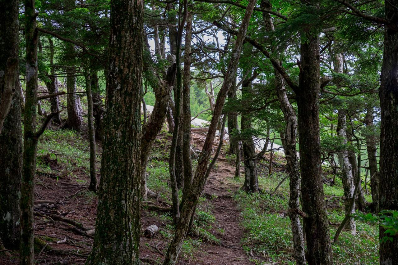 200719雨乞岳-049