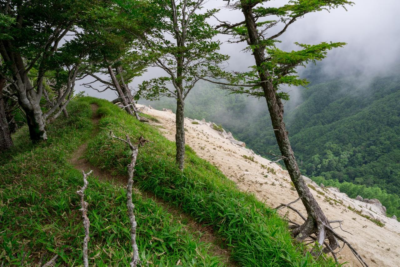200719雨乞岳-052