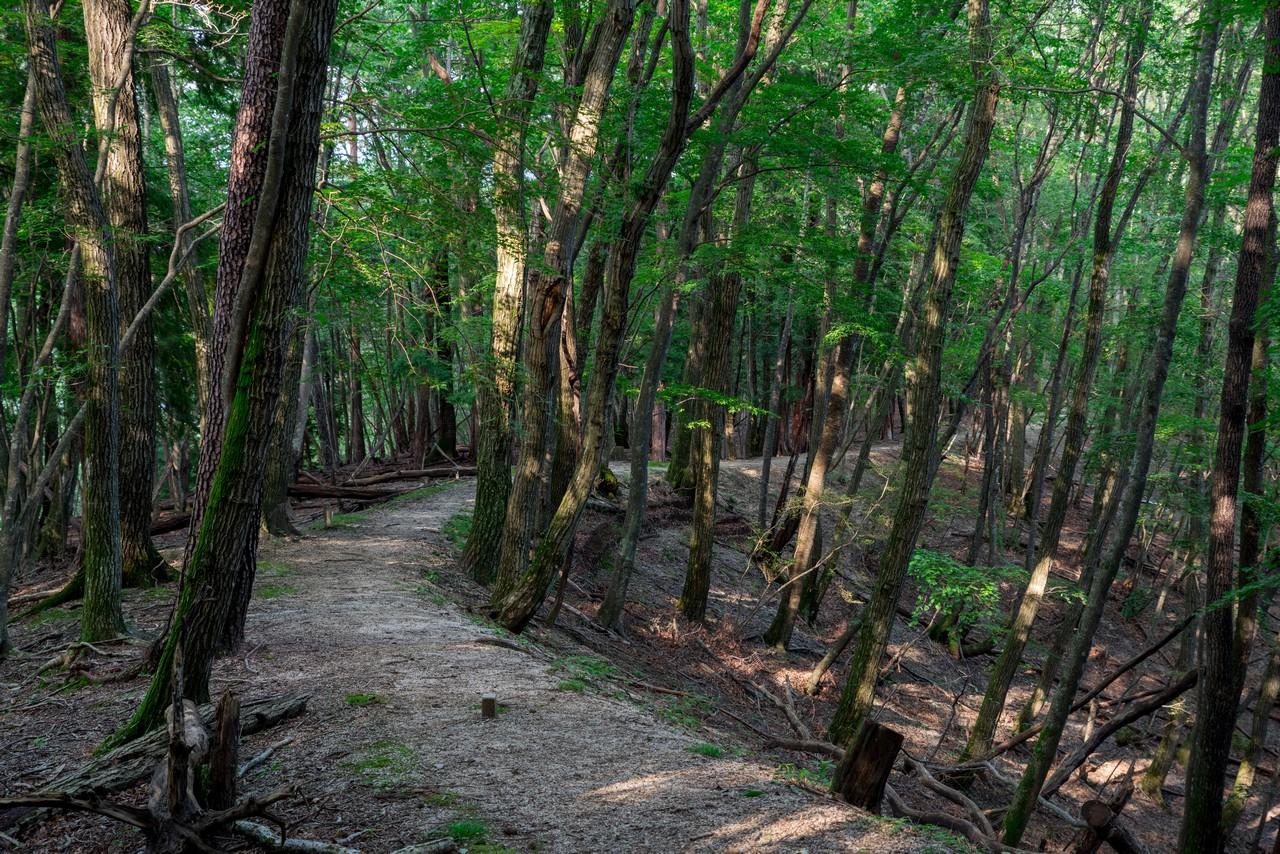 200719雨乞岳-067