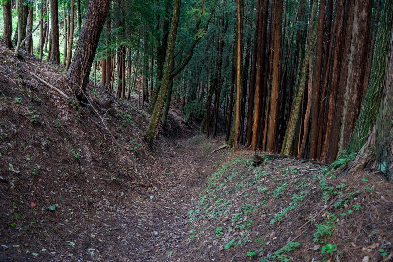 200719雨乞岳-069