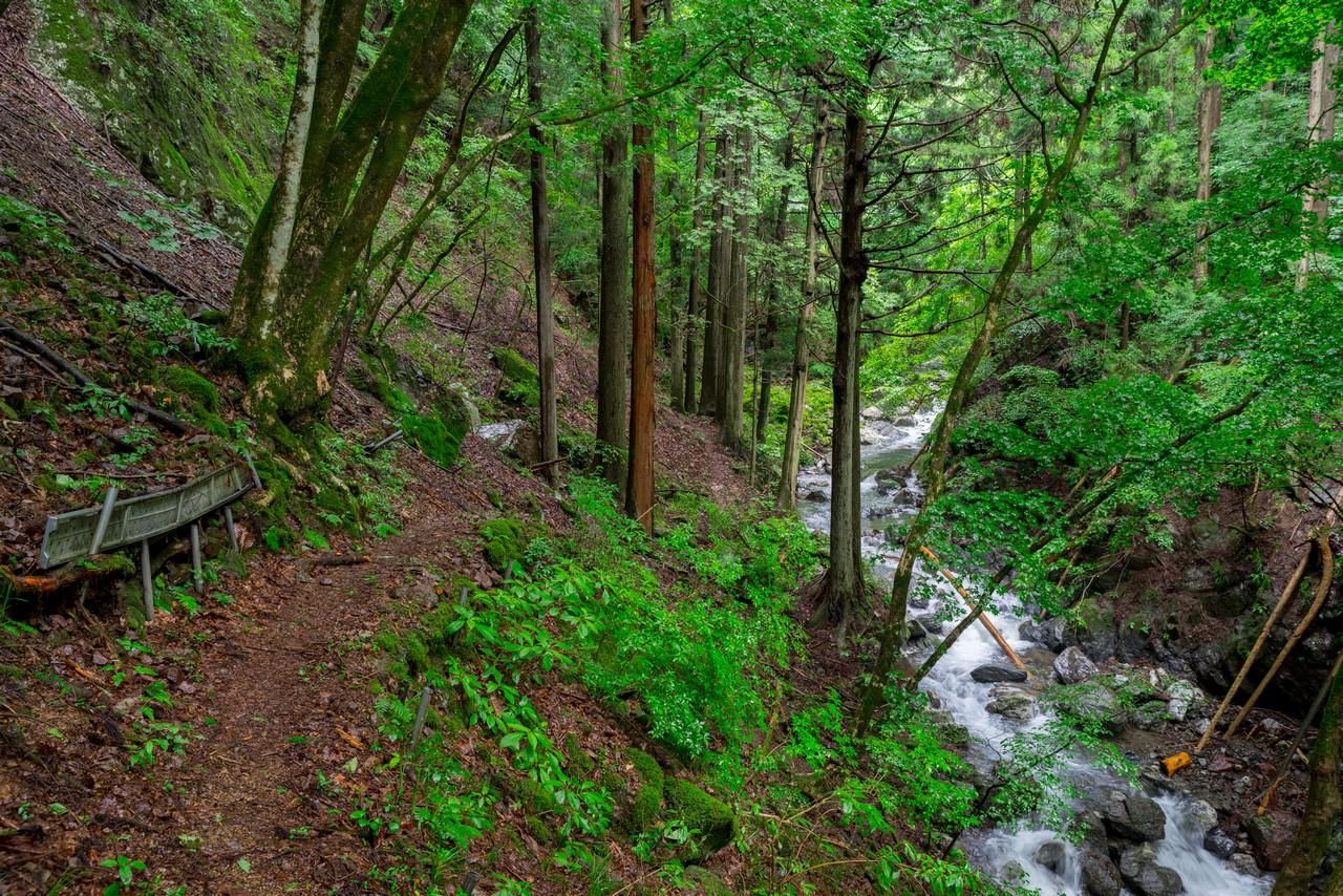 200726檜原滝巡り-026