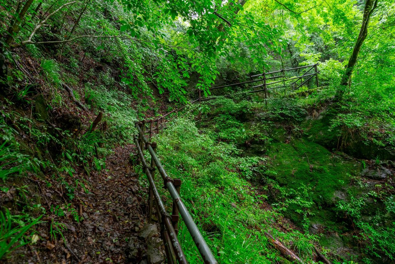 200726檜原滝巡り-031
