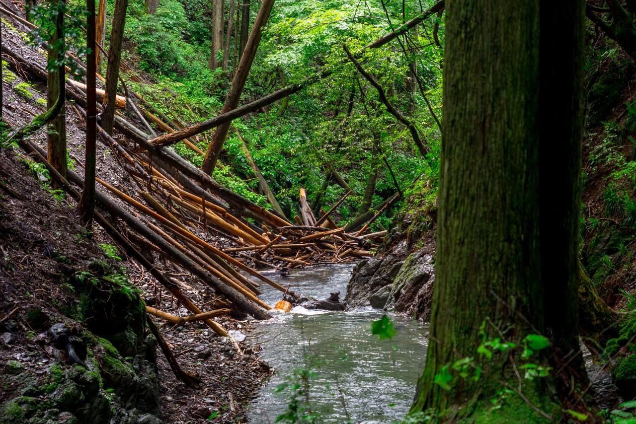 200726檜原滝巡り-035