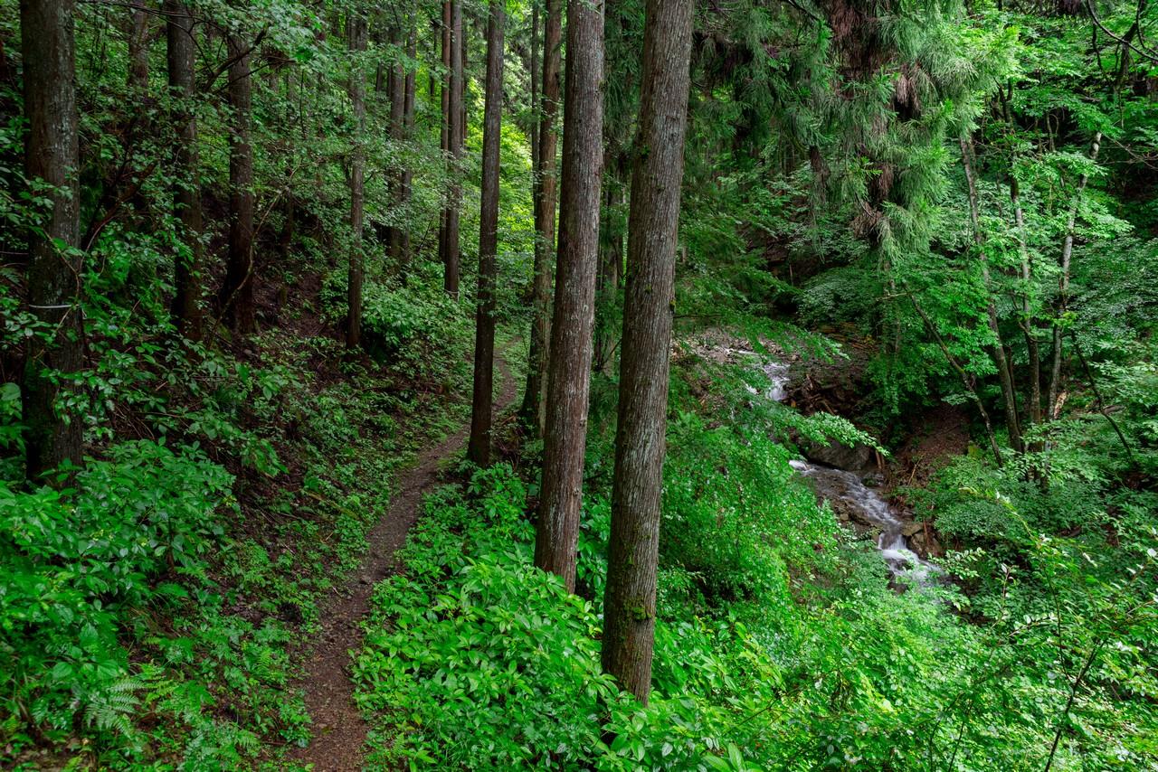 200726檜原滝巡り-053