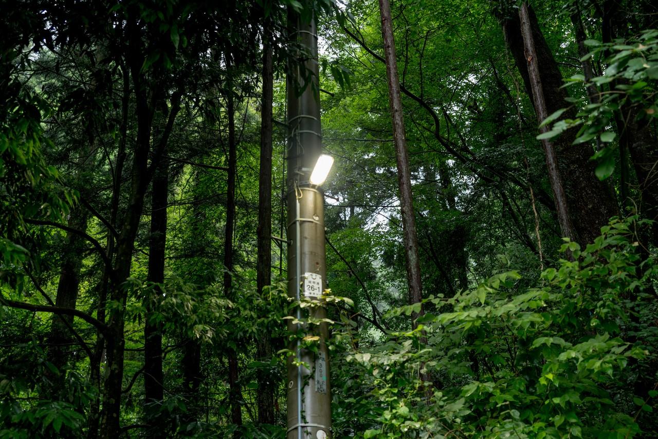 200726檜原滝巡り-065