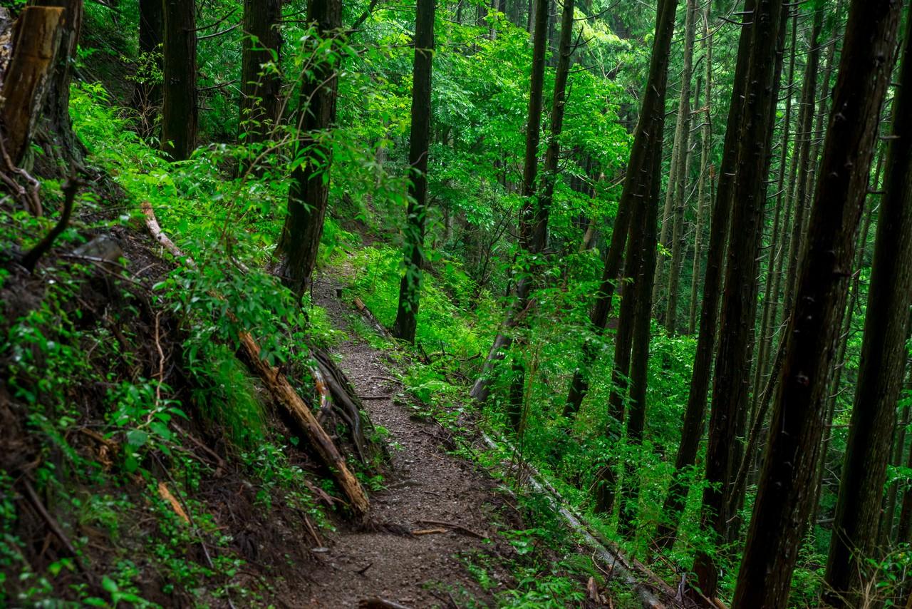 200726檜原滝巡り-071