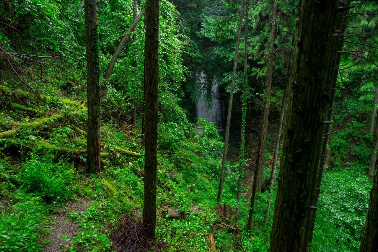 200726檜原滝巡り-073