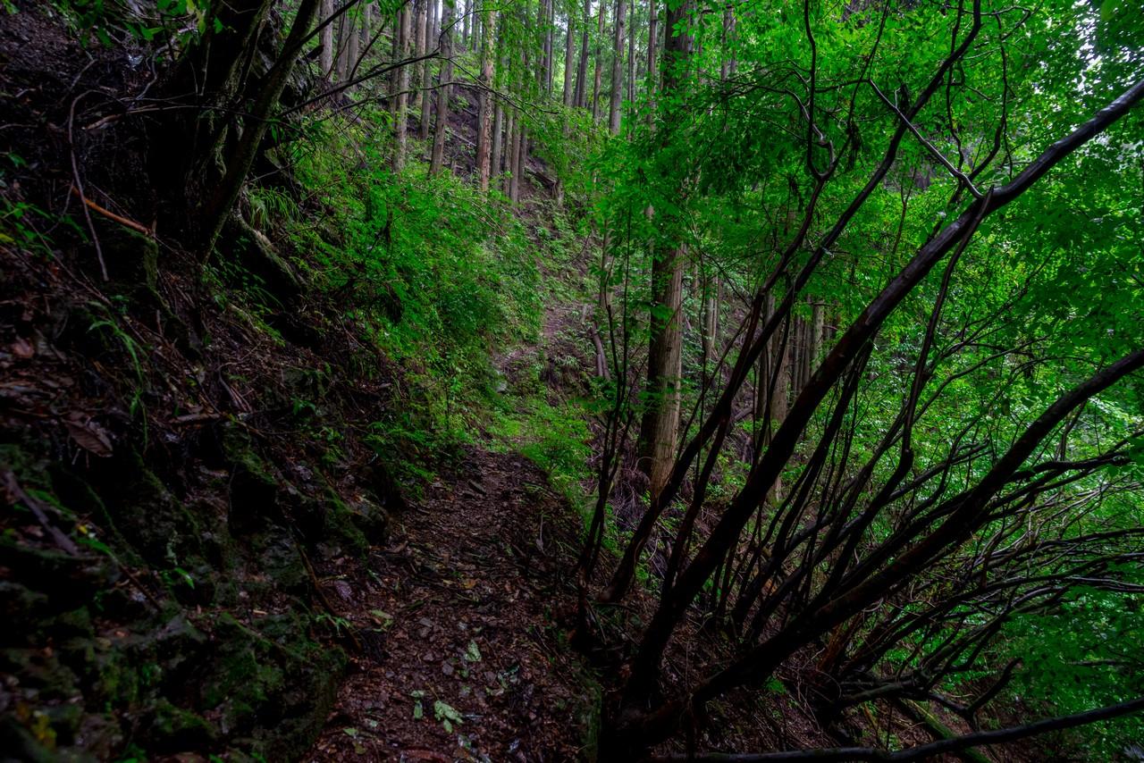 200726檜原滝巡り-079