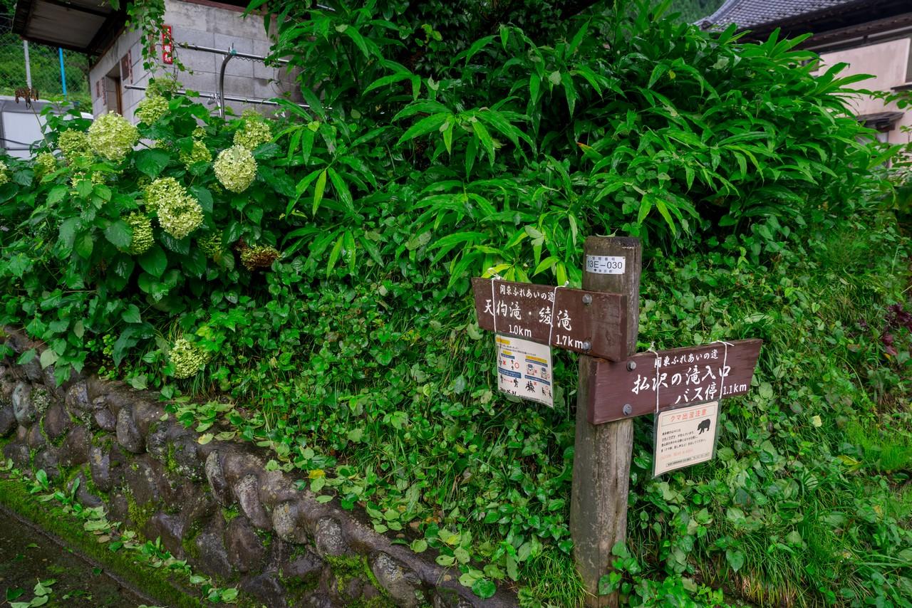 200726檜原滝巡り-093
