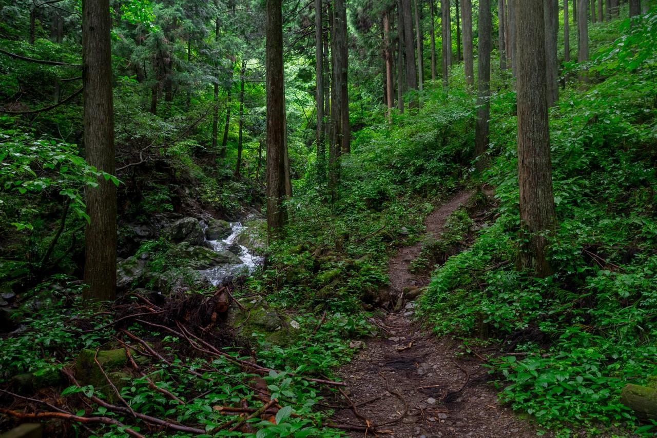 200726檜原滝巡り-101