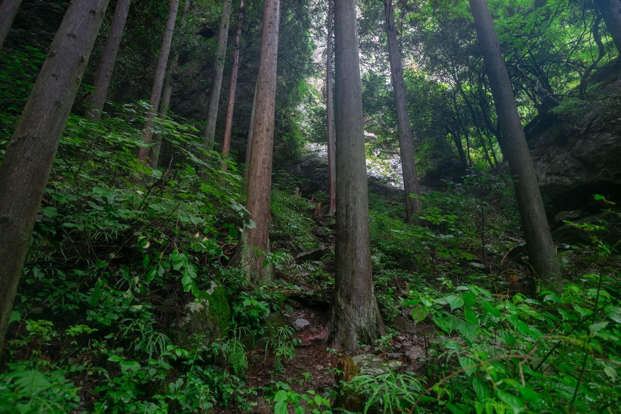 200726檜原滝巡り-104