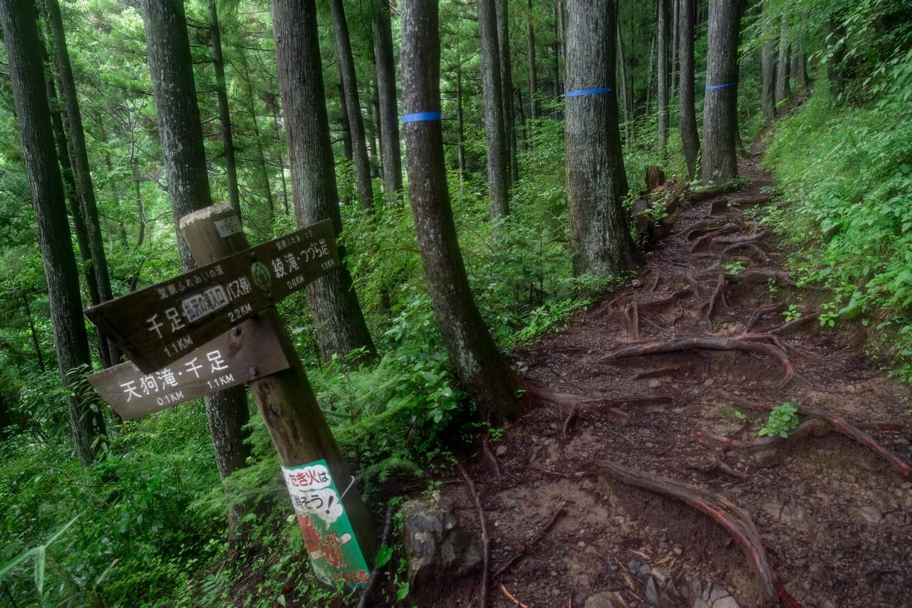 200726檜原滝巡り-110