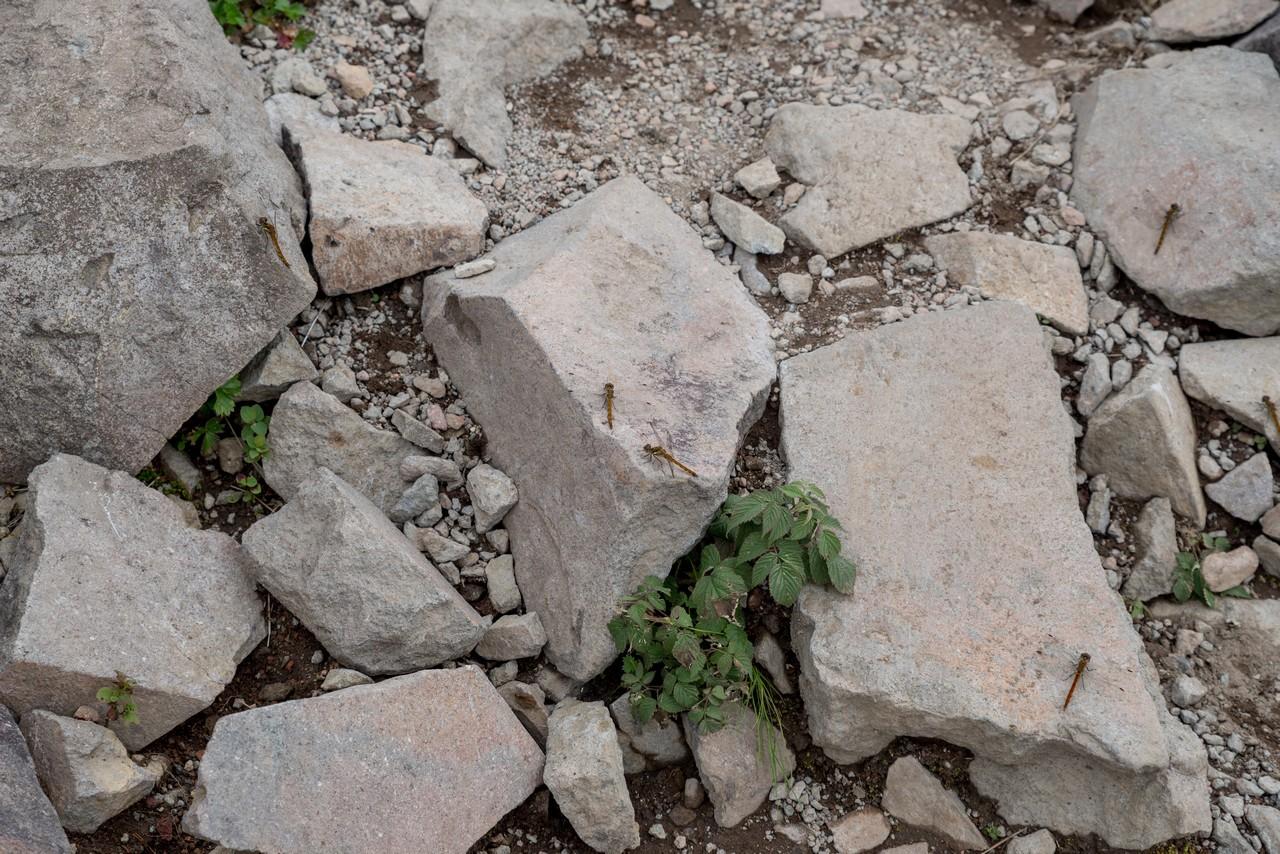 200802磐梯山-068