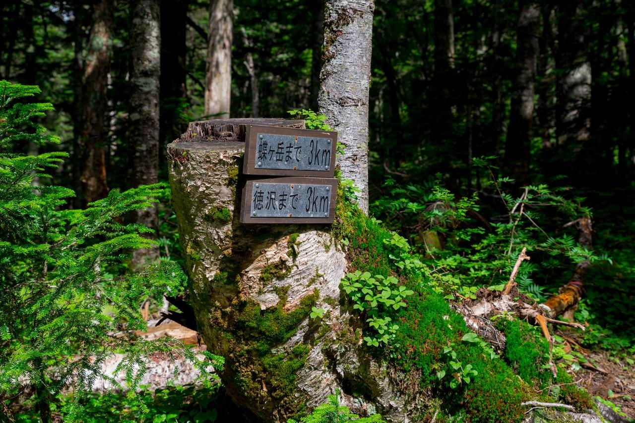 200810蝶ヶ岳-033