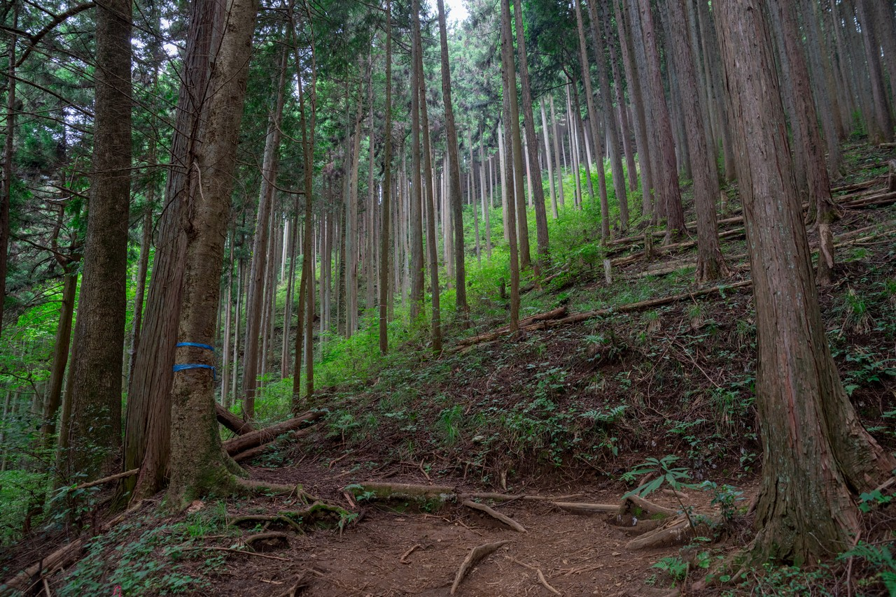 200823御岳山-027