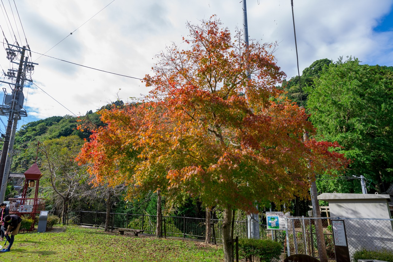201011竜爪山-013