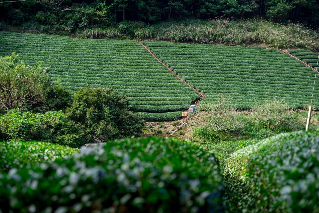 201011竜爪山-019