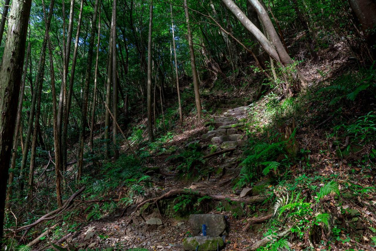 201011竜爪山-031
