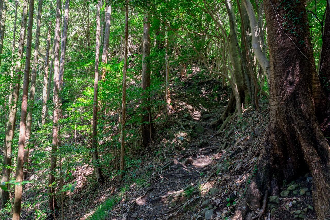 201011竜爪山-039