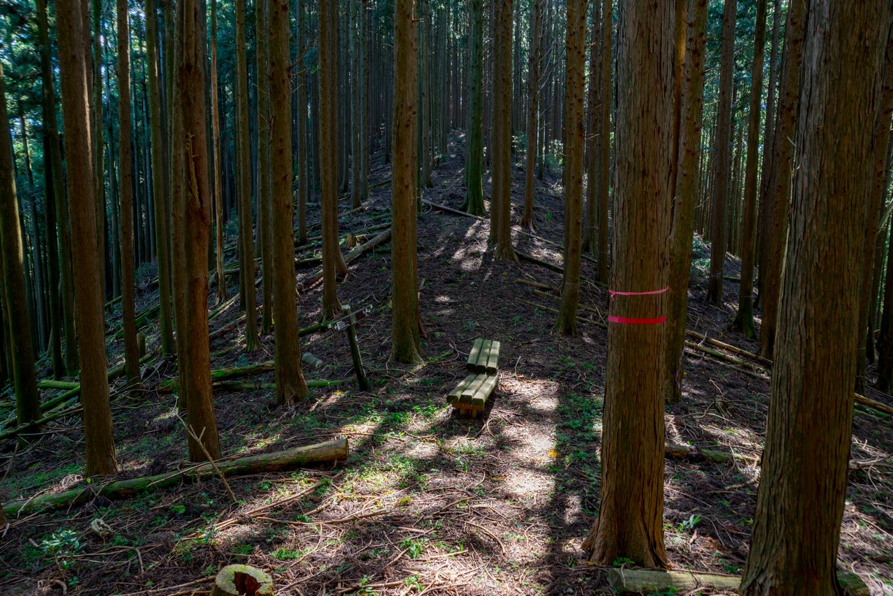 201011竜爪山-079