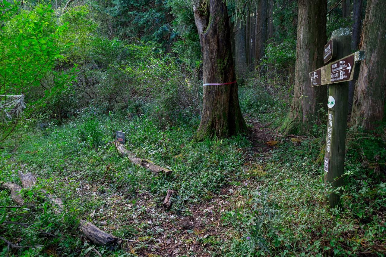 201011竜爪山-081
