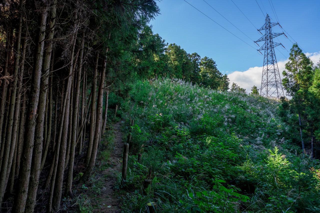 201011竜爪山-086