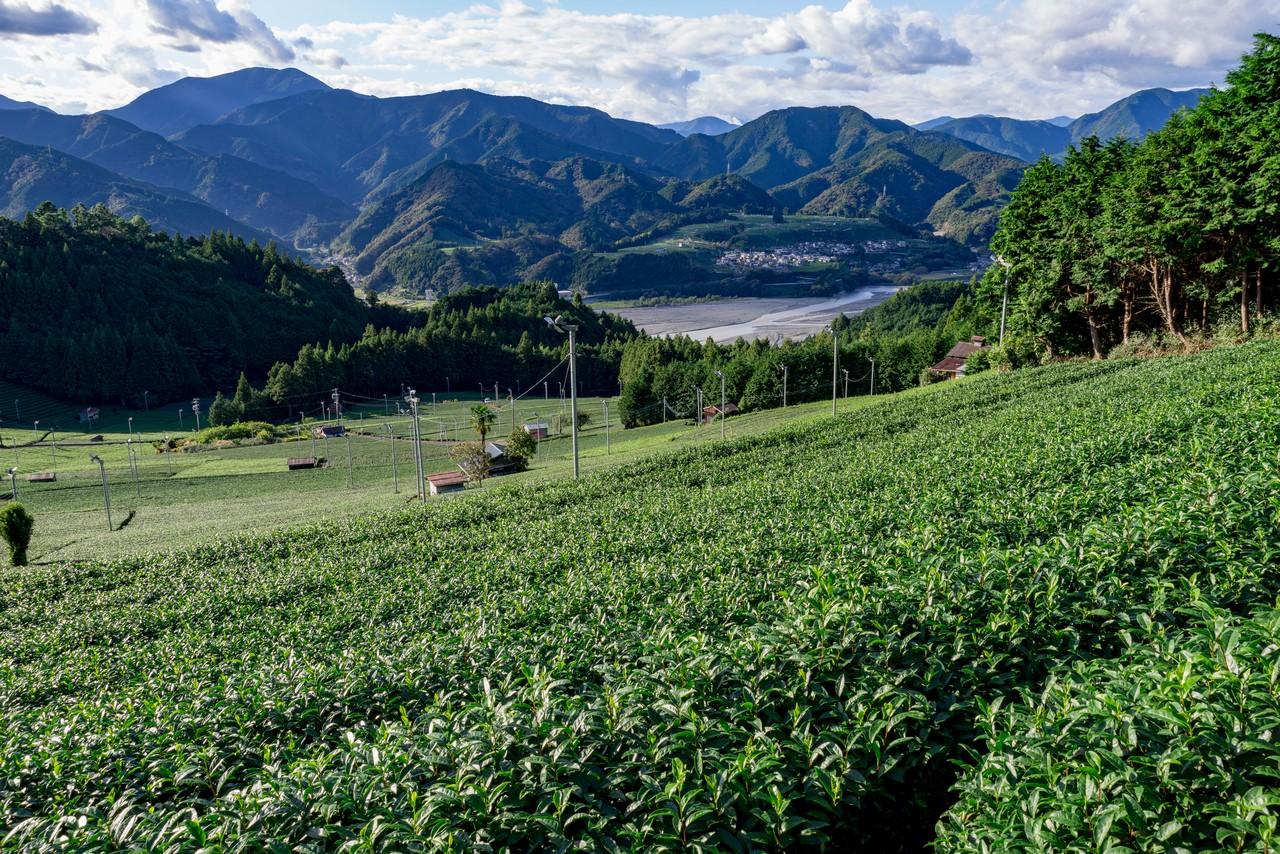 201011竜爪山-096