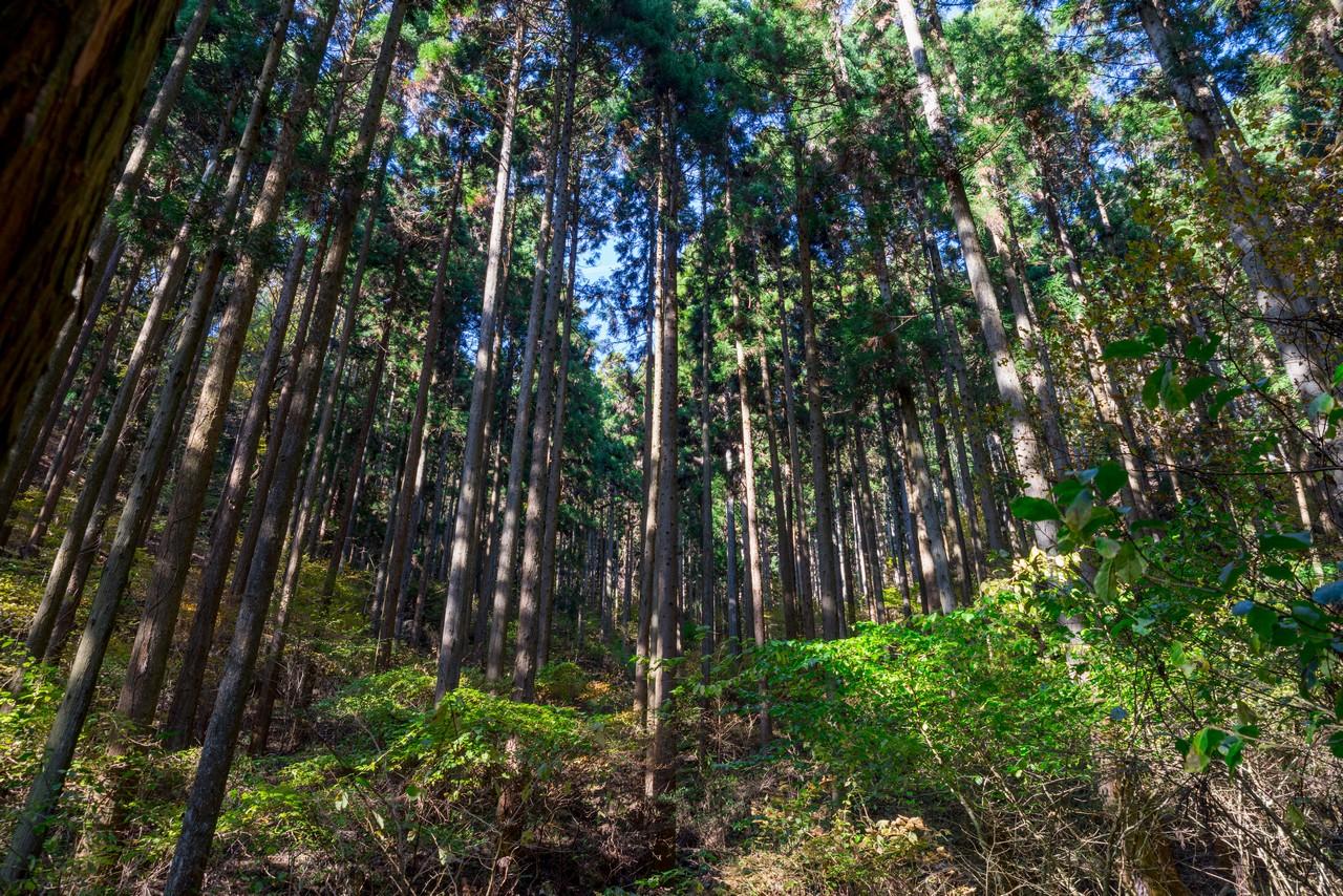 201115城峯山-022