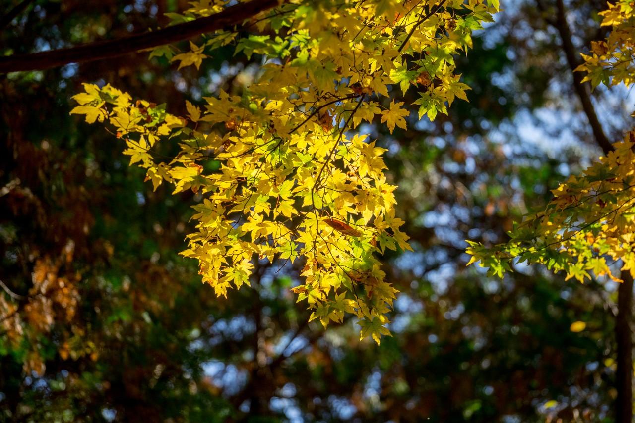201115城峯山-028