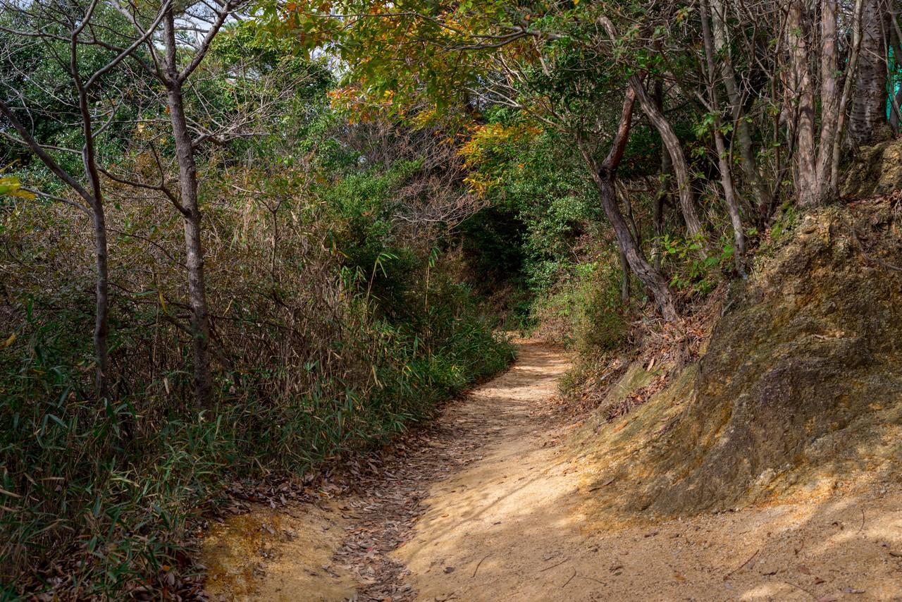 201122六甲山-036