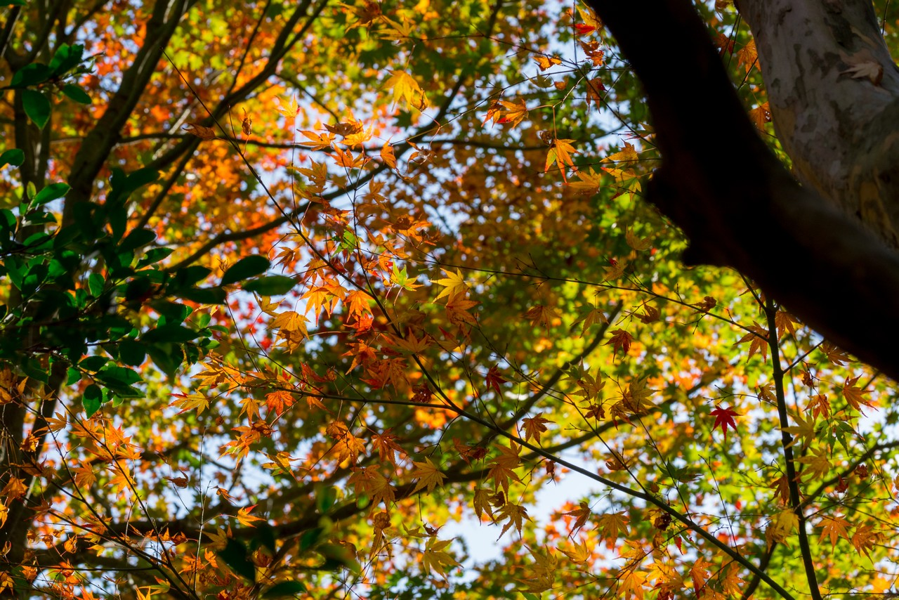 201122六甲山-045