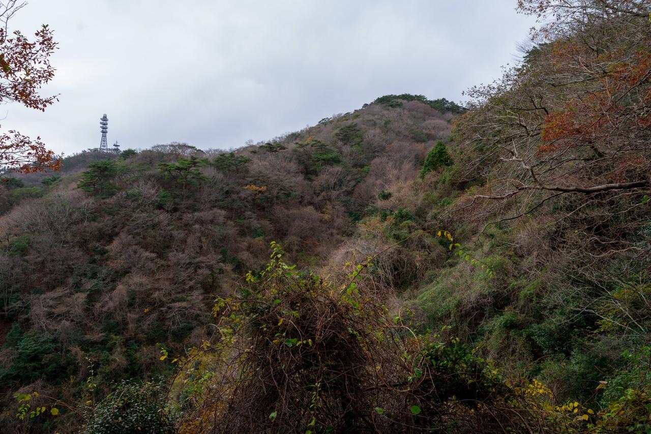 201122六甲山-055