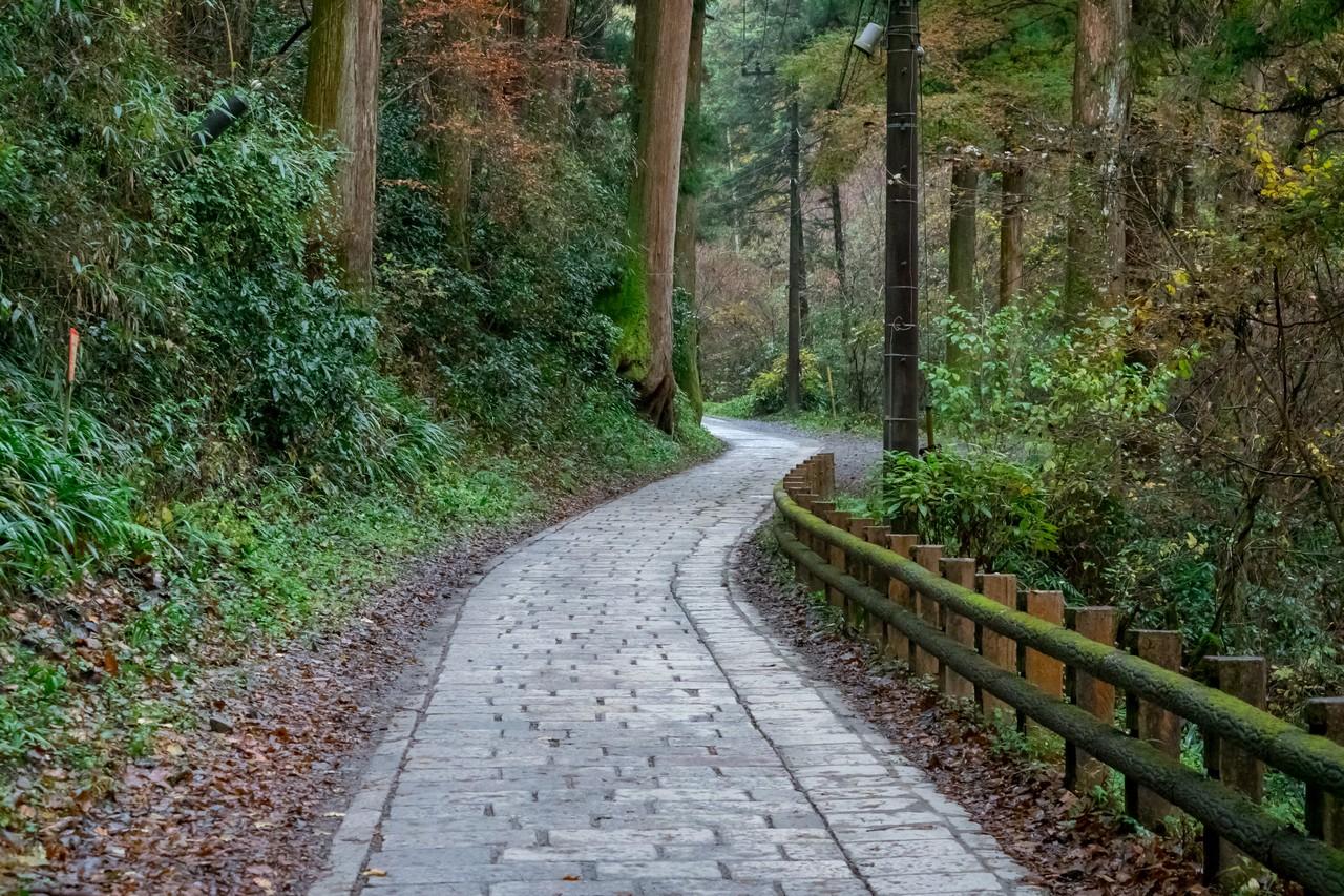 201126高尾山-013