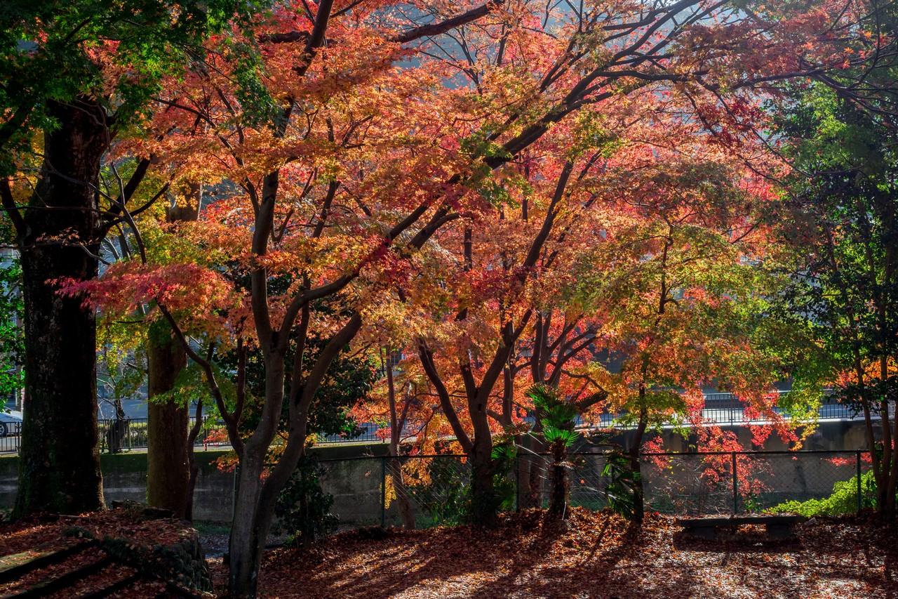 201126高尾山-074