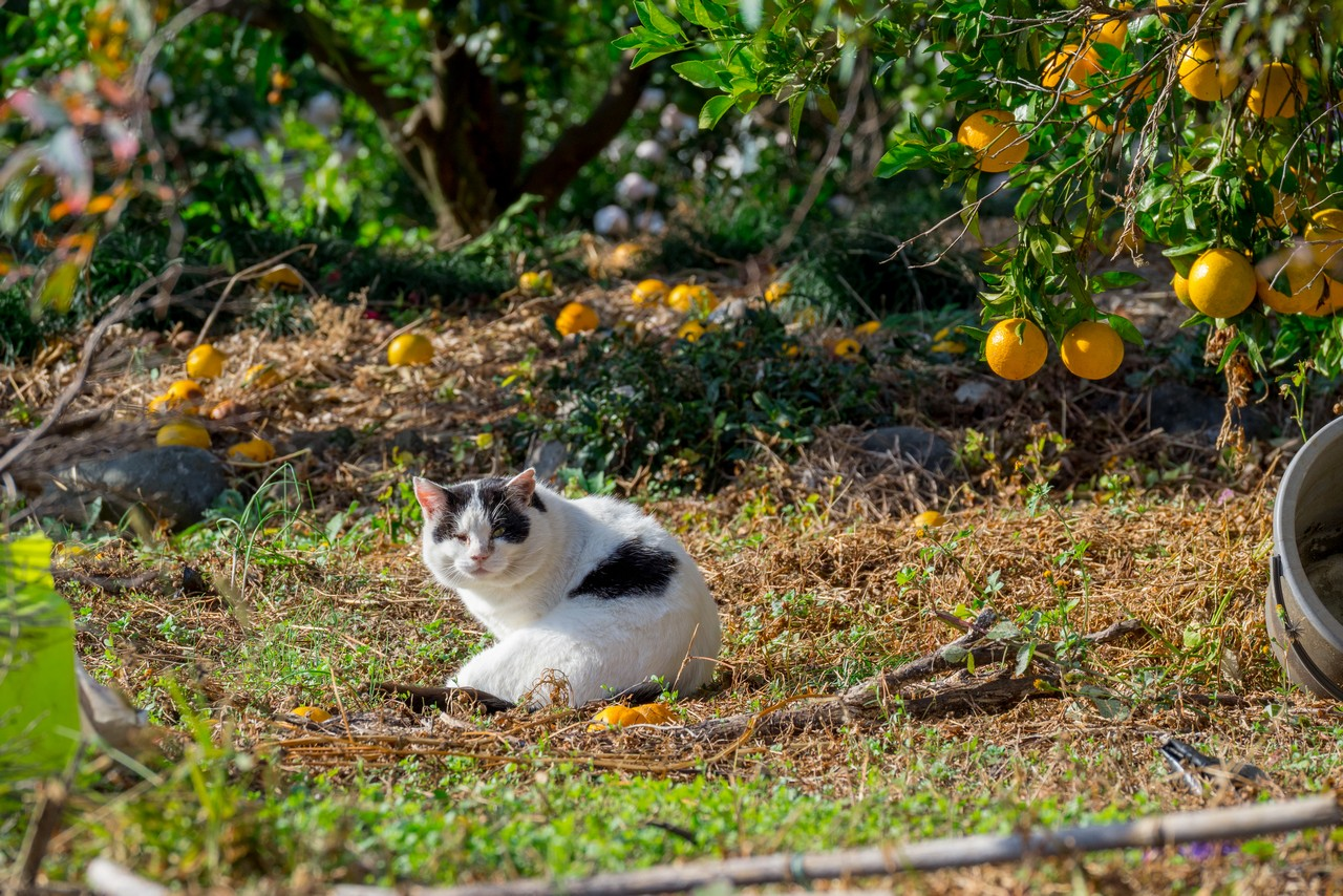 201129浜石岳-028