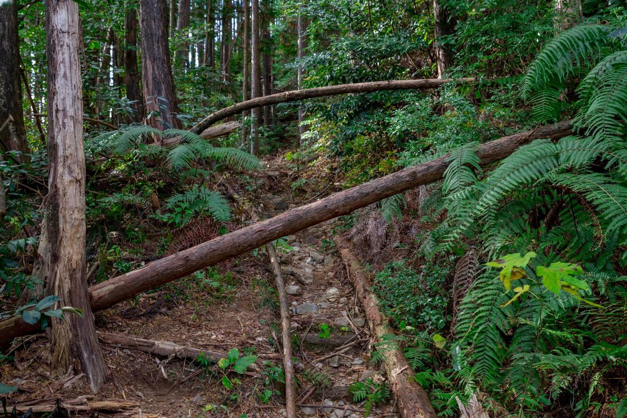 201129浜石岳-046