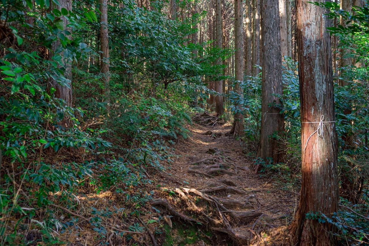 201129浜石岳-052