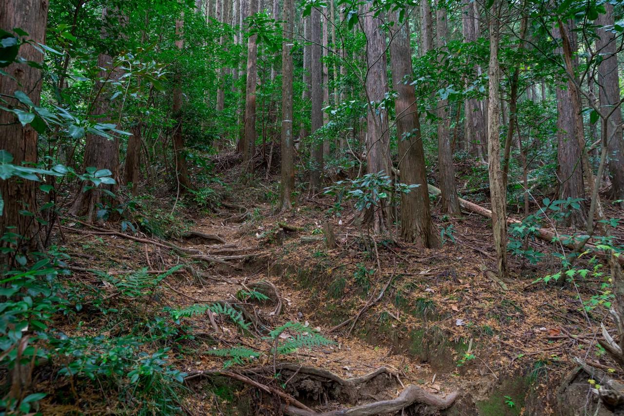 201129浜石岳-071
