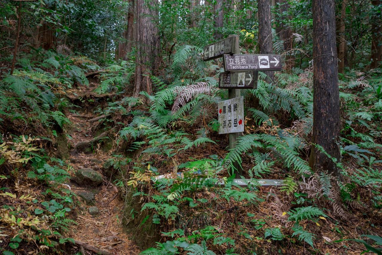 201129浜石岳-072