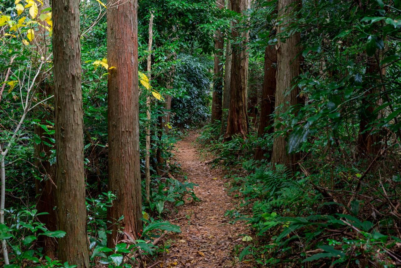 201129浜石岳-075