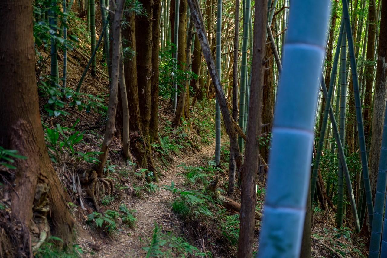 201129浜石岳-076