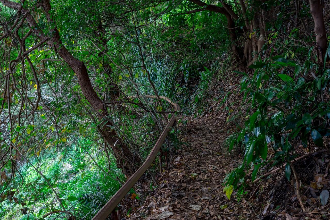 201129浜石岳-079