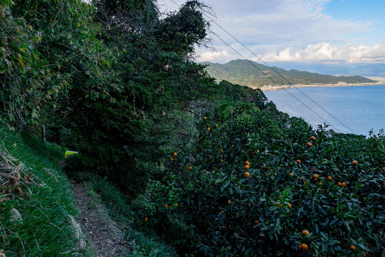 201129浜石岳-083