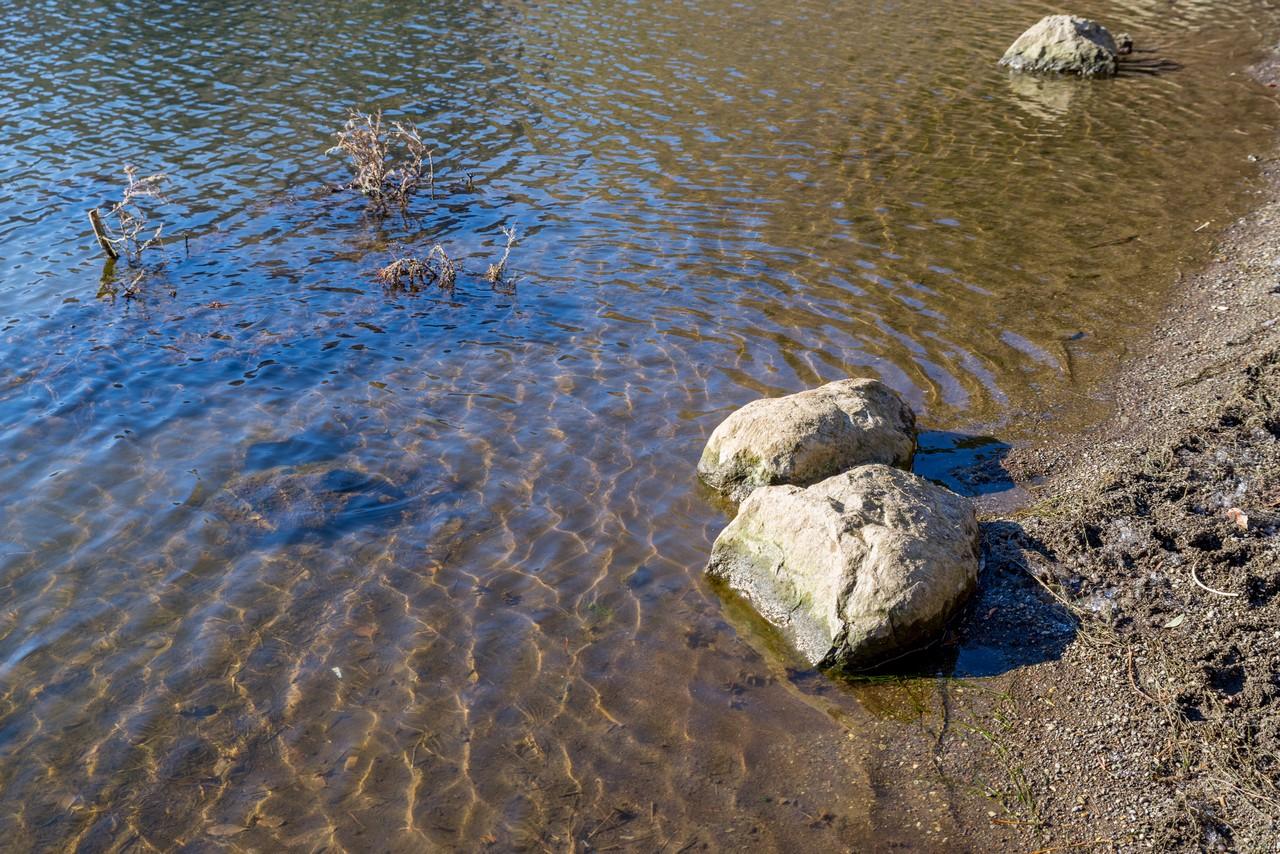 精進湖の湖水