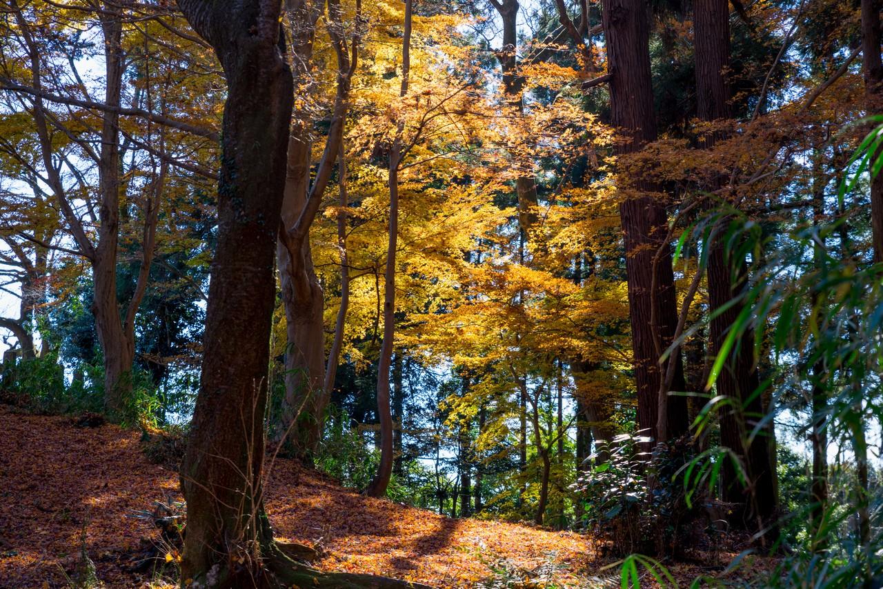 八王子城山の紅葉