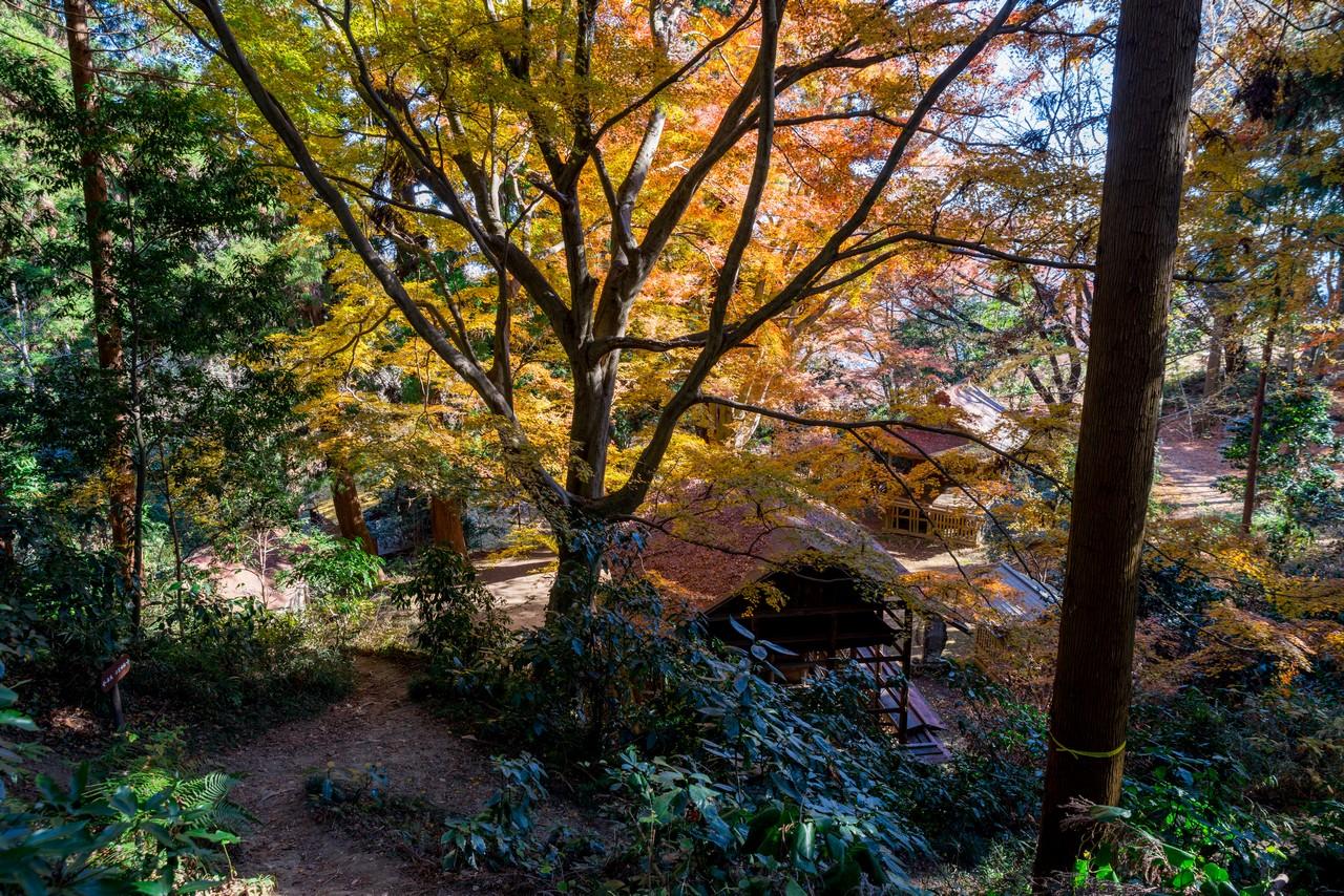 201223北高尾山稜-042