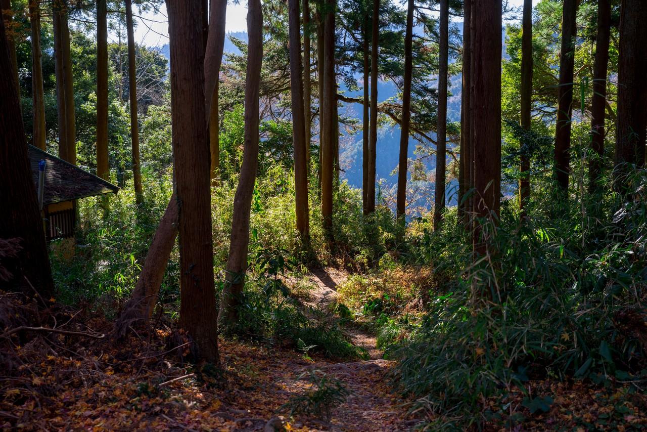 201223北高尾山稜-044